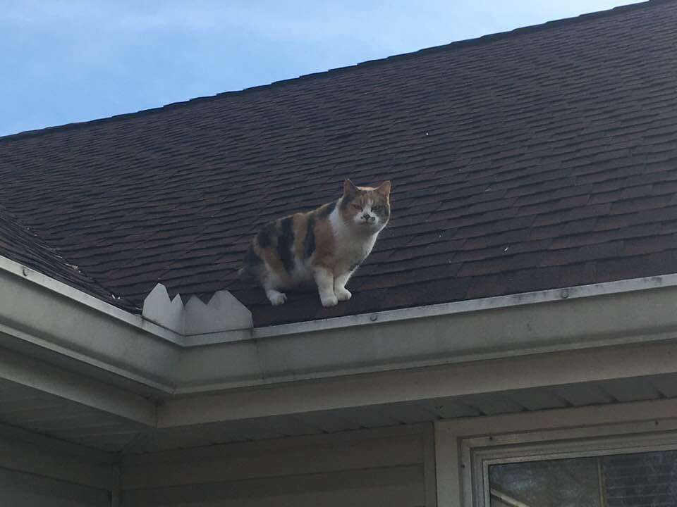 cat on the roof of a home