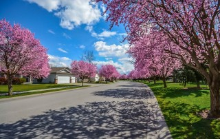 neighborhood in spring where homeowners are spring cleaning